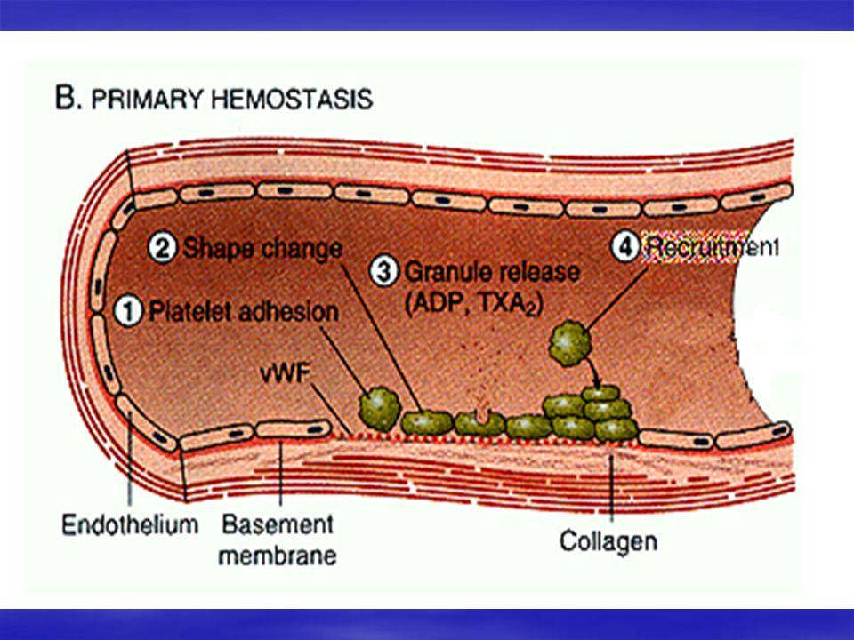 Hemostasis 4