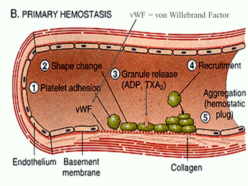 summary vWF = von Willebrand Factor