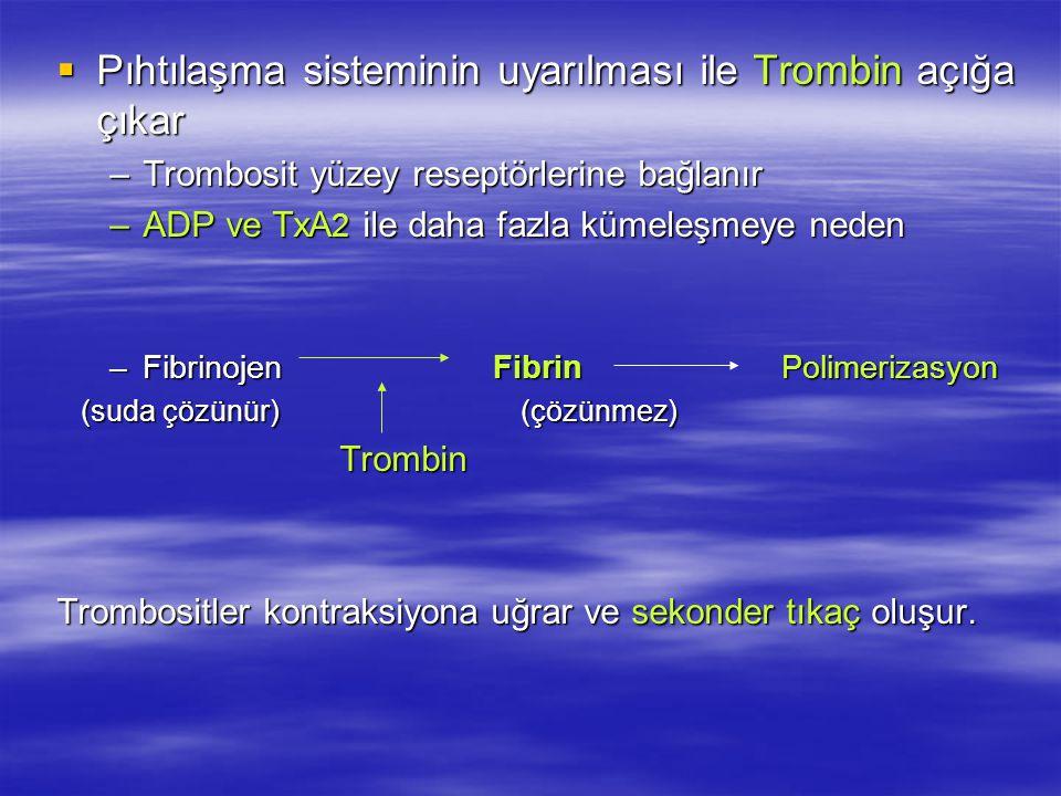  Pıhtılaşma sisteminin uyarılması ile Trombin açığa çıkar –Trombosit yüzey reseptörlerine bağlanır –ADP ve TxA 2 ile daha fazla kümeleşmeye neden –Fibrinojen Fibrin Polimerizasyon (suda çözünür) (çözünmez) (suda çözünür) (çözünmez) Trombin Trombin Trombositler kontraksiyona uğrar ve sekonder tıkaç oluşur.