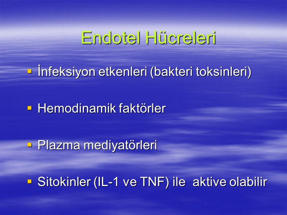 Endotel  Aktive olunca doku faktörü salgılar  Pıhtılaşma zinciri ekstrensek yolu uyarır  Sonuçta trombin ve fibrin ortaya çıkacak