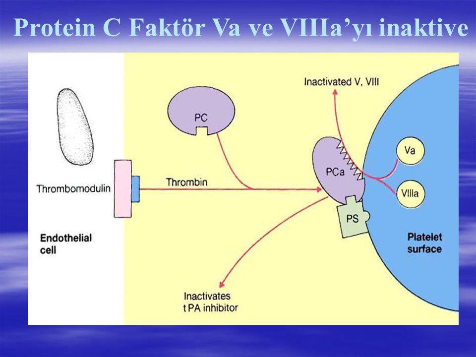 Protein C Faktör Va ve VIIIa'yı inaktive