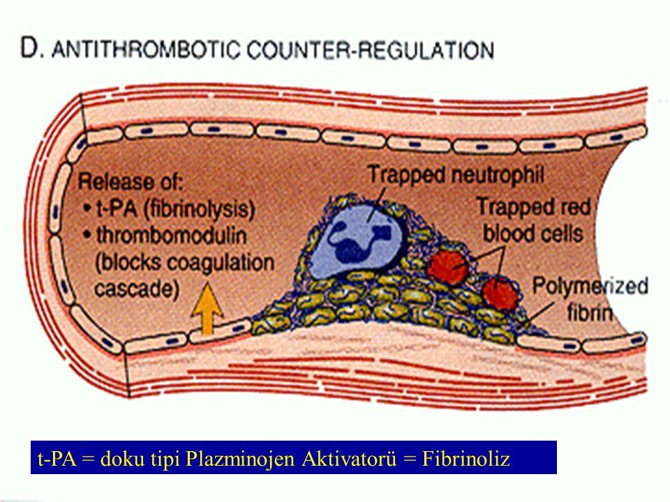 Kan Pıhtılaşma Testleri   Protrombin zamanı (PT)   Parsiyel tromboplastin zamanı (PTT)