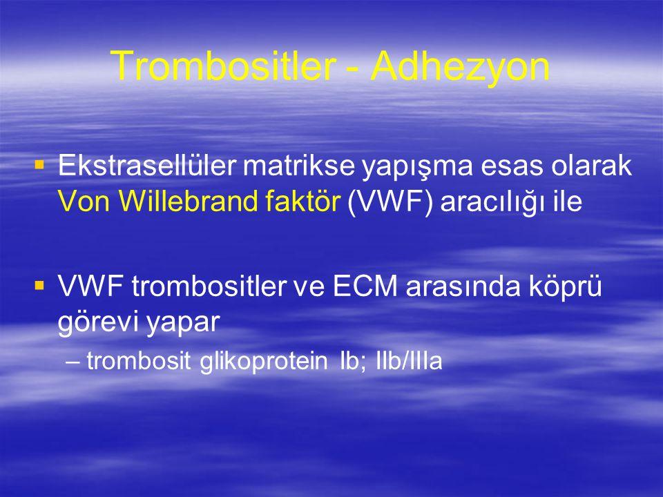Trombositler - Adhezyon   Ekstrasellüler matrikse yapışma esas olarak Von Willebrand faktör (VWF) aracılığı ile   VWF trombositler ve ECM arasında köprü görevi yapar – –trombosit glikoprotein Ib; IIb/IIIa