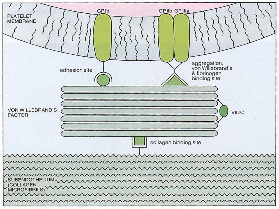 Trombositler - Sekresyon   Trombosit yüzey reseptörlerine bağlanan agonistler oluşturduğu intrasellüler fosforilasyon neticesinde başlar   Granüllerin içeriği salınır – –ADP kümeleşmeyi artırır – –Ca++ pıhtılaşmada önemlidir   Tromboksan A2 sentezi yapılır