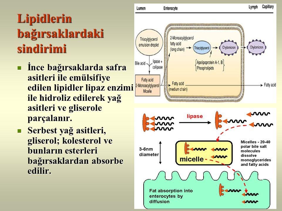 Kolesterol Fosfolipidler Trigliseridler Kolesterol esterleri Apolipoproteinler Lipoproteinlerin yapıları