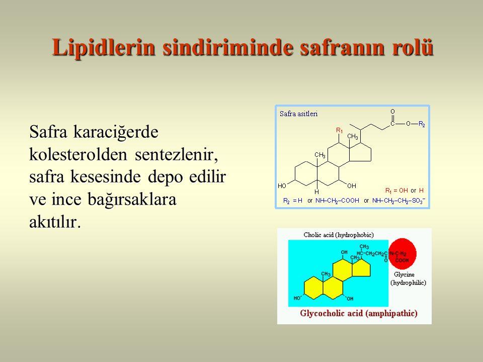 Bağırsak mukoza hücrelerinde Şilomikron oluşumu Şilomikron