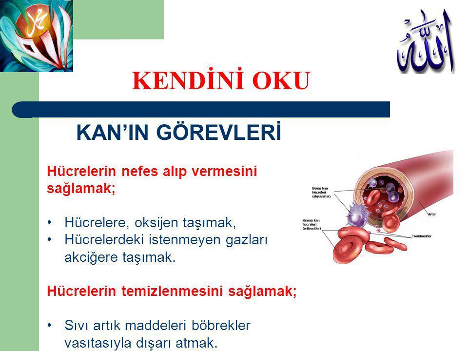 KAN'IN GÖREVLERİ Hücrelerin nefes alıp vermesini sağlamak; Hücrelere, oksijen taşımak, Hücrelerdeki istenmeyen gazları akciğere taşımak. Hücrelerin te