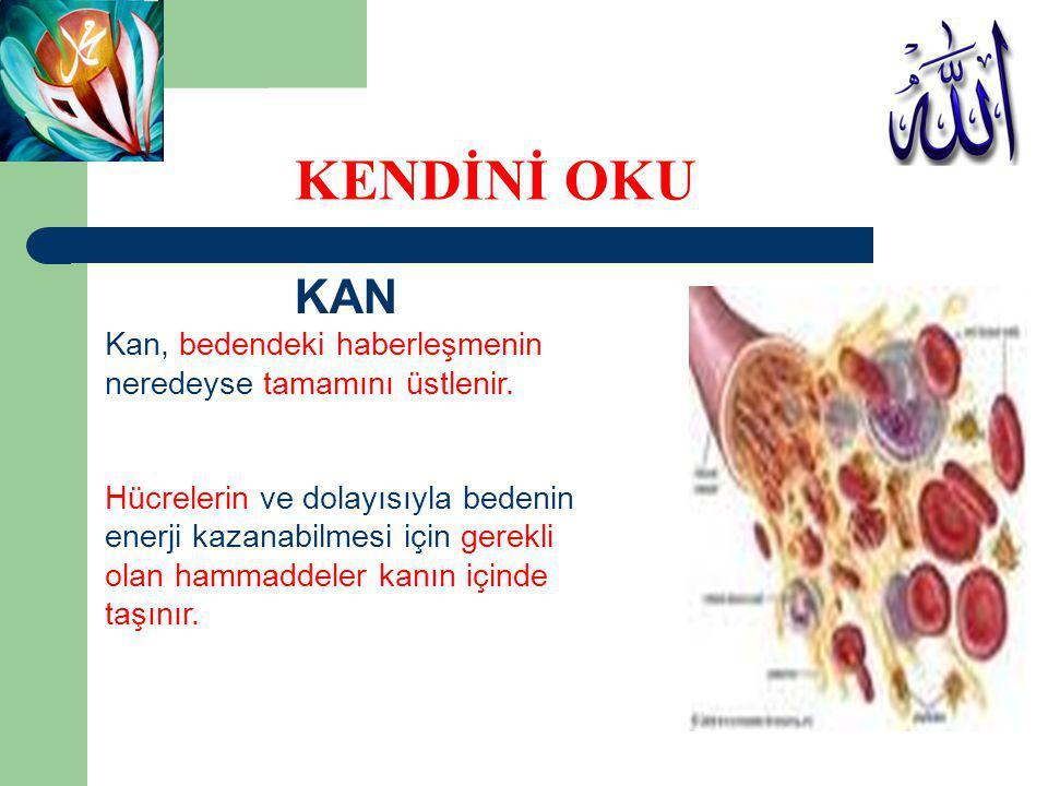 KAN Kan, bedendeki haberleşmenin neredeyse tamamını üstlenir. Hücrelerin ve dolayısıyla bedenin enerji kazanabilmesi için gerekli olan hammaddeler kan