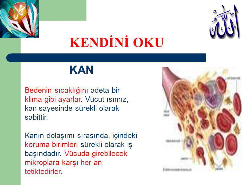 KAN Kan, vücudun yiyecek servisini de üstlenmiştir.