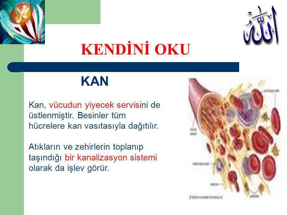 KAN Kan, vücudun yiyecek servisini de üstlenmiştir. Besinler tüm hücrelere kan vasıtasıyla dağıtılır. Atıkların ve zehirlerin toplanıp taşındığı bir k