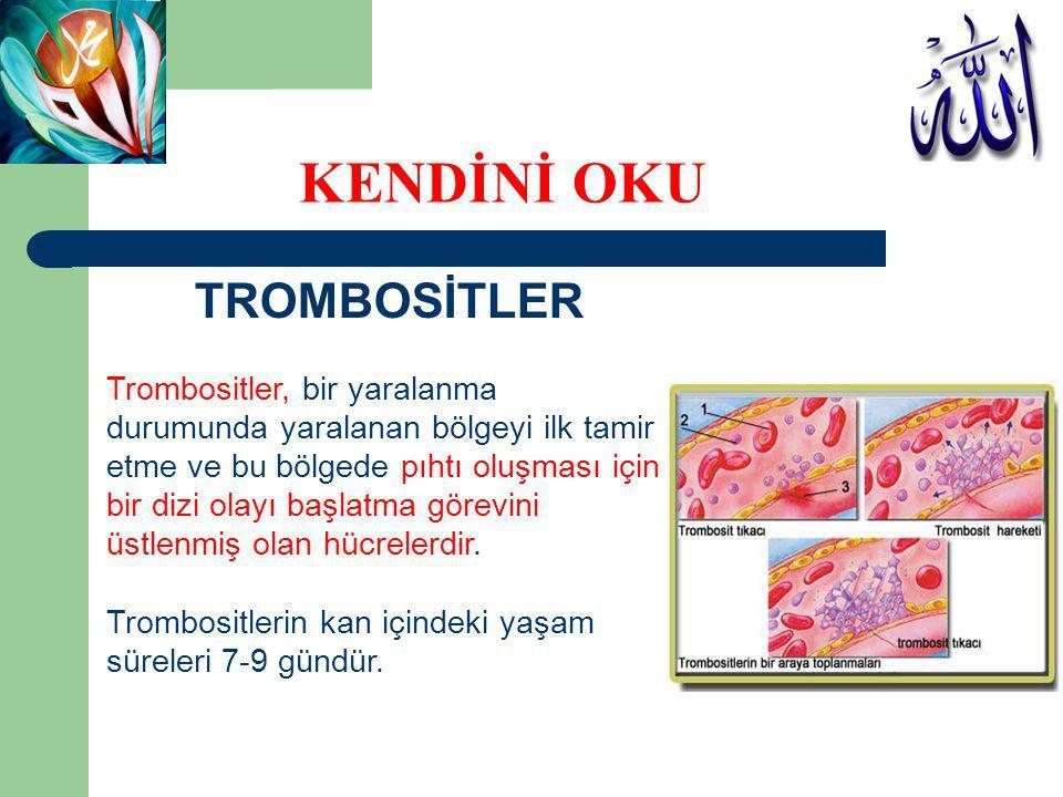 TROMBOSİTLER Trombositler, bir yaralanma durumunda yaralanan bölgeyi ilk tamir etme ve bu bölgede pıhtı oluşması için bir dizi olayı başlatma görevini