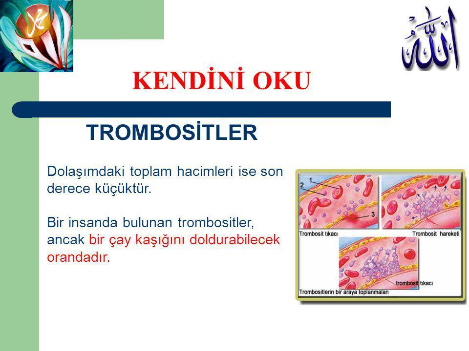 TROMBOSİTLER Dolaşımdaki toplam hacimleri ise son derece küçüktür. Bir insanda bulunan trombositler, ancak bir çay kaşığını doldurabilecek orandadır.