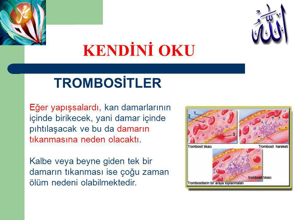TROMBOSİTLER Bu hücrelerin yapışkanlık özellikleri, ancak damarın içindeki söz konusu endotel doku herhangi bir şekilde zarar gördüğünde ortaya çıkar.