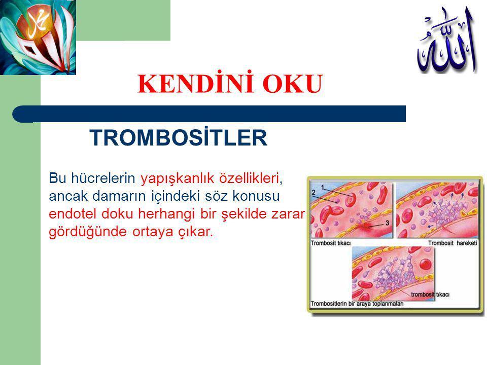 TROMBOSİTLER Endotel hücreler zarar gördüğünde bu yapının altındaki protein yapı yani kollajen açığa çıkar.