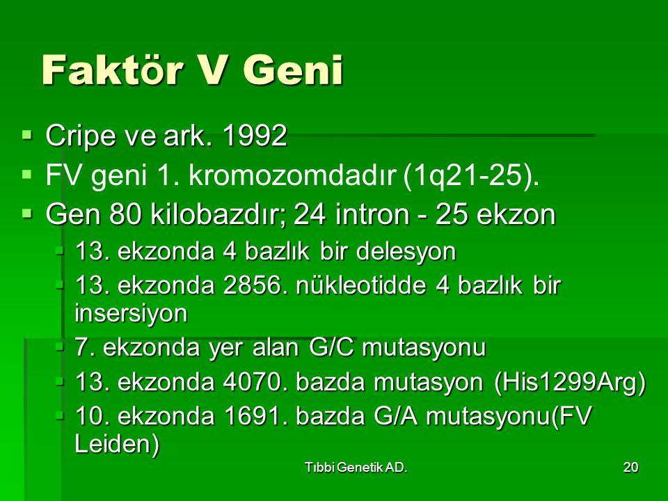 Tıbbi Genetik AD.20 Fakt ö r V Geni  Cripe ve ark. 1992   FV geni 1. kromozomdadır (1q21-25).  Gen 80 kilobazdır; 24 intron - 25 ekzon  13. ekzon