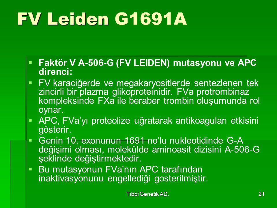 Tıbbi Genetik AD.21 FV Leiden FV Leiden G1691A   Faktör V A-506-G (FV LEIDEN) mutasyonu ve APC direnci:   FV karaciğerde ve megakaryositlerde sentezlenen tek zincirli bir plazma glikoproteinidir.
