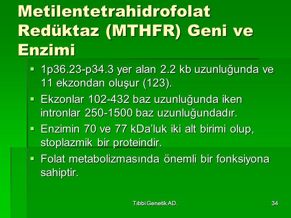 Tıbbi Genetik AD.34 Metilentetrahidrofolat Redüktaz (MTHFR) Geni ve Enzimi  1p36.23-p34.3 yer alan 2.2 kb uzunluğunda ve 11 ekzondan oluşur (123).