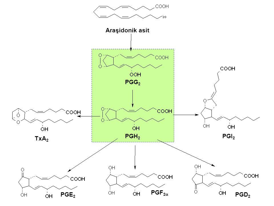 Araşidonik asit PGG 2 PGH 2 PGE 2 PGF 2  PGD 2 PGI 2 TxA 2