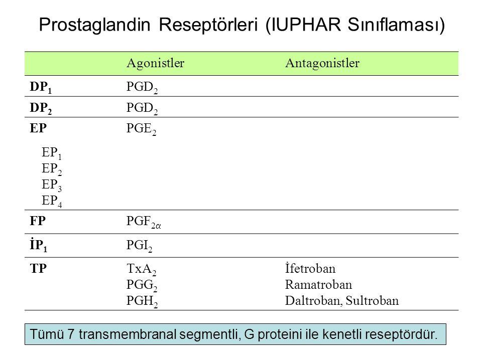 Prostaglandin Reseptörleri (IUPHAR Sınıflaması) AgonistlerAntagonistler DP 1 PGD 2 DP 2 PGD 2 EPPGE 2 EP 1 EP 2 EP 3 EP 4 FPPGF 2  İP 1 PGI 2 TPTxA 2