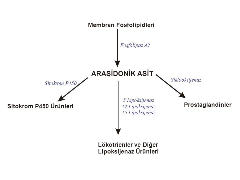 Membran Fosfolipidleri ARAŞİDONİK ASİT Prostaglandinler Lökotrienler ve Diğer Lipoksijenaz Ürünleri Sitokrom P450 Ürünleri Siklooksijenaz Sitokrom P45