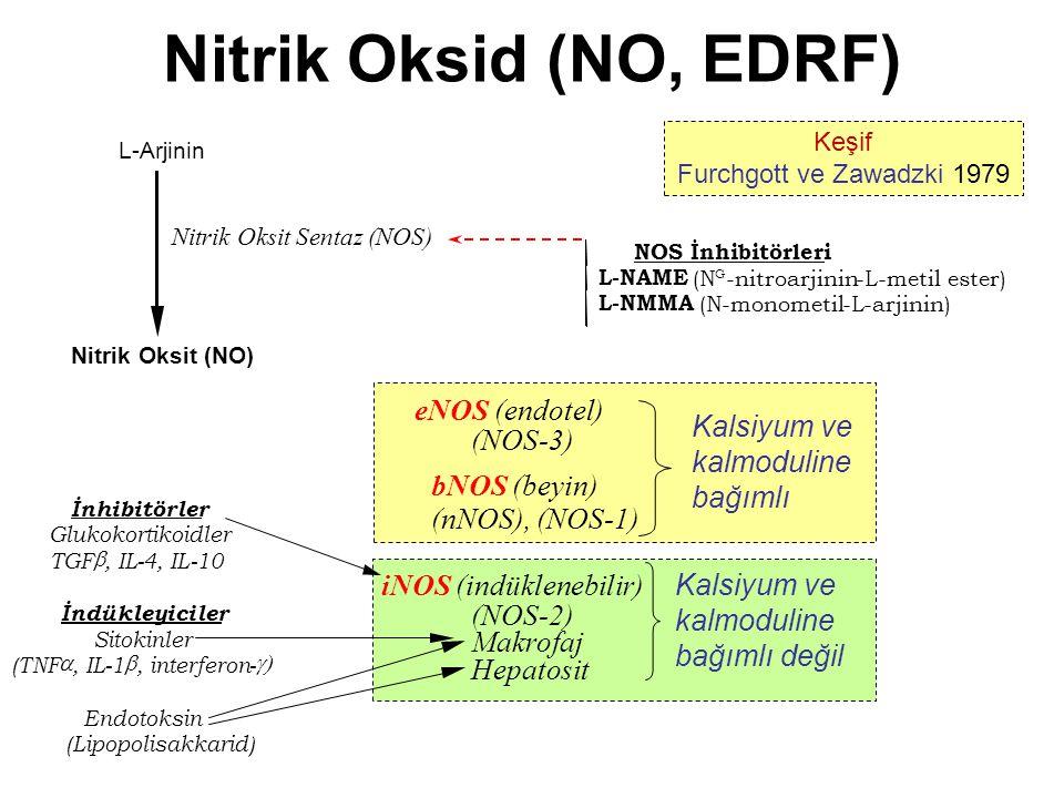 Nitrik Oksid (NO, EDRF) L-Arjinin Nitrik Oksit (NO) eNOS (endotel) (NOS-3) bNOS (beyin) (nNOS), (NOS-1) Nitrik Oksit Sentaz (NOS) iNOS (indüklenebilir