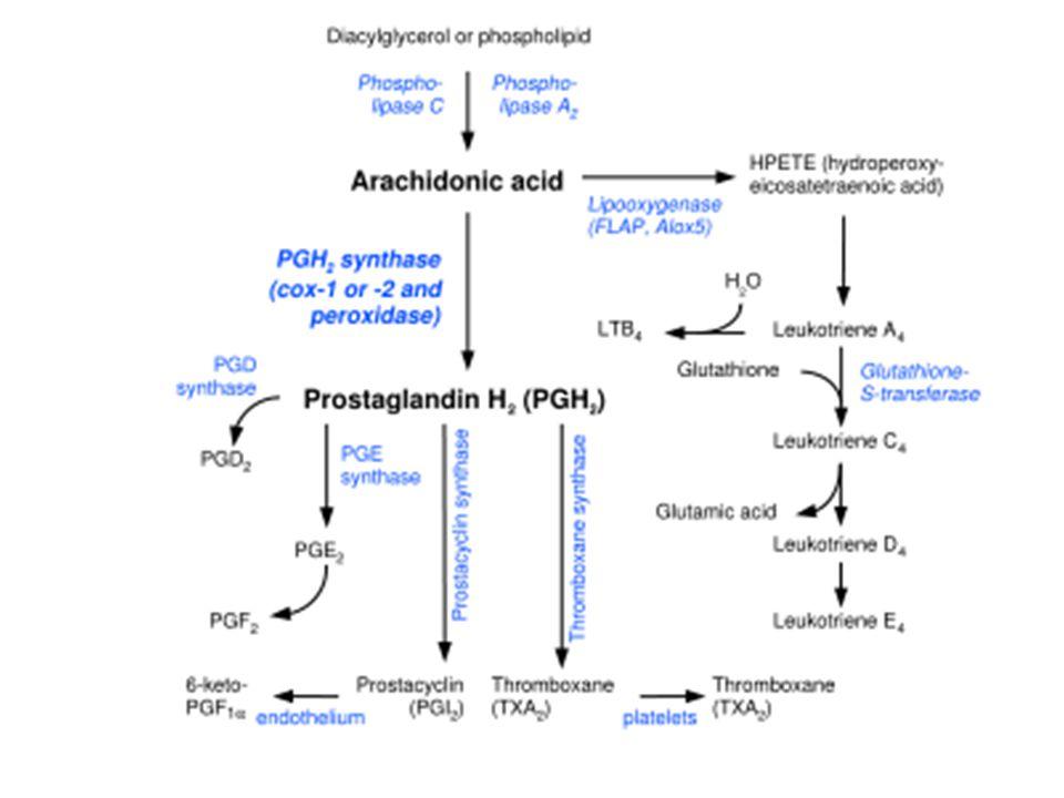 PGI 2 6-keto PGF 1  6-keto PGE 1 Prostasiklin sentaz non enzimatik FOSFOLİPİDLER Araşidonik Asit PGG 2 PGD 2 TxA 2 Siklooksijenaz (COX) COX1 COX2 Tromboksan sentaz Endoperoksit D izomeraz PGH 2 9-hidroksiprostaglandin dehidrojenaz TxB 2 non enzimatik PGF 2  PGE 2 Endoperoksit E izomeraz Endoperoksit redüktaz PGE 2 PGF 2  9 hidroksiprostaglandin dehidrojenaz 9 ketoredüktaz