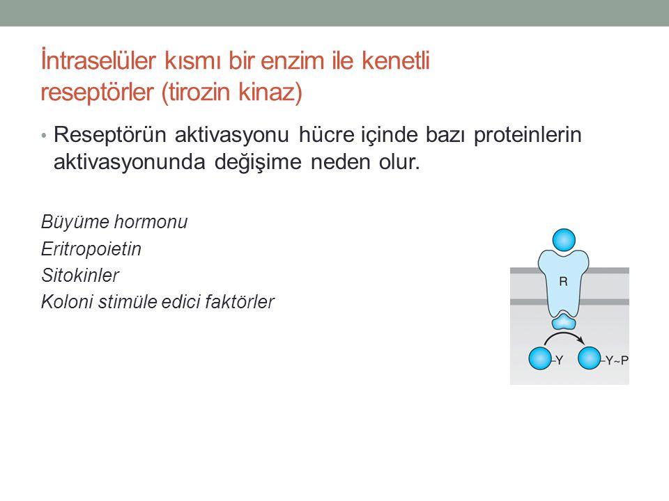 İntraselüler kısmı bir enzim ile kenetli reseptörler (tirozin kinaz) Reseptörün aktivasyonu hücre içinde bazı proteinlerin aktivasyonunda değişime ned