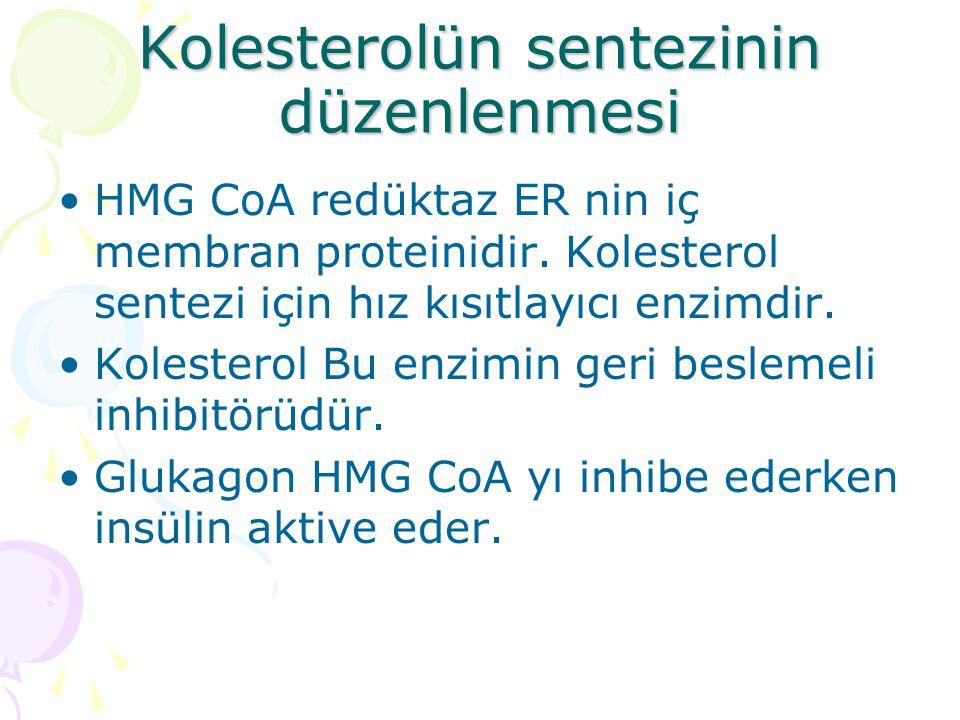Kolesterolün sentezinin düzenlenmesi HMG CoA redüktaz ER nin iç membran proteinidir.