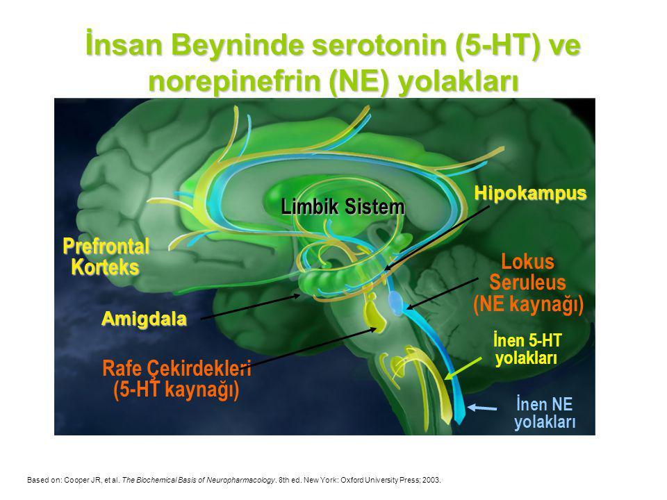 Limbik Sistem Prefrontal Korteks Lokus Seruleus (NE kaynağı) Rafe Çekirdekleri (5-HT kaynağı) İnsan Beyninde serotonin (5-HT) ve norepinefrin (NE) yol