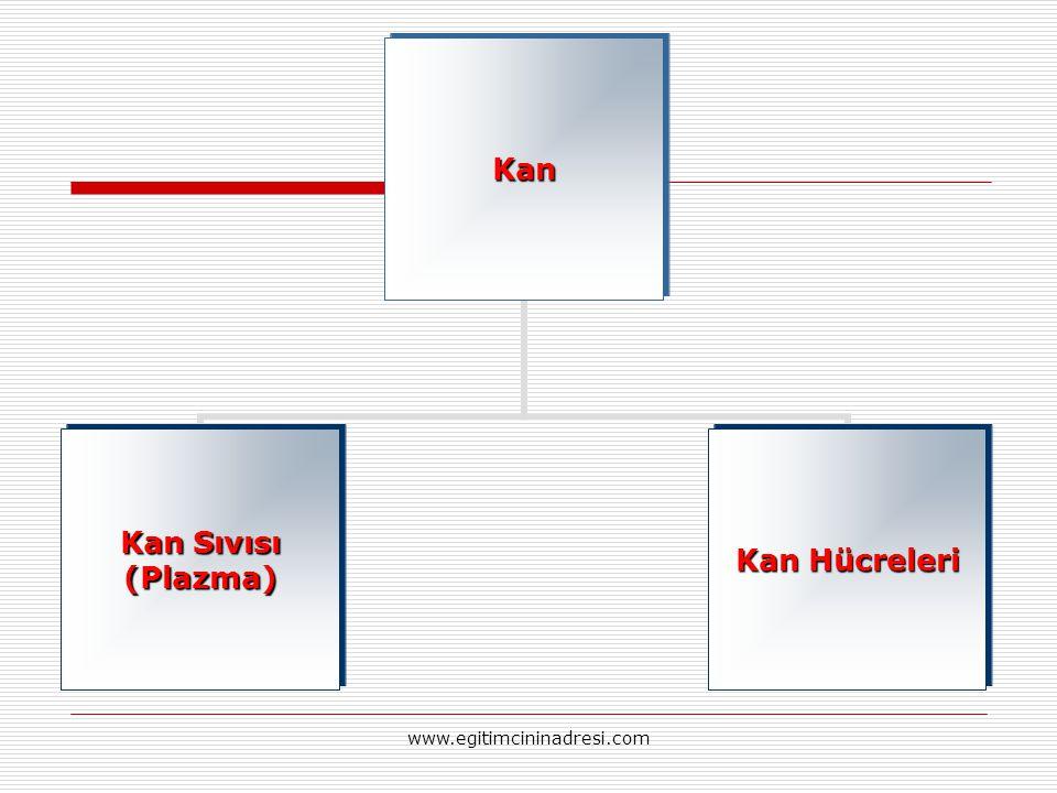Kan Kan Sıvısı (Plazma) Kan Hücreleri www.egitimcininadresi.com