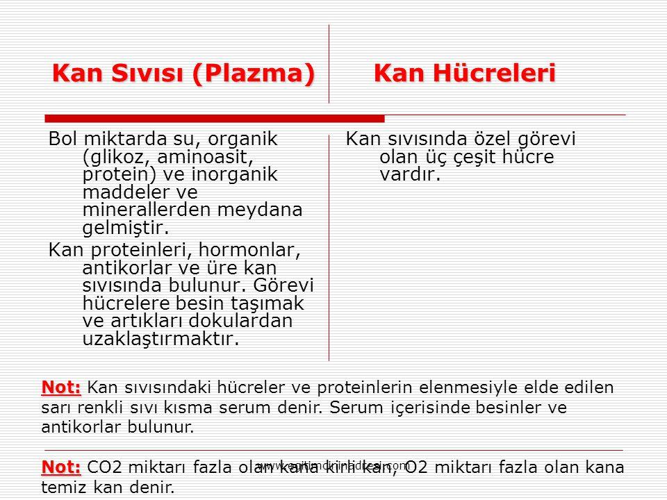 Kan Sıvısı (Plazma)Kan Hücreleri Kan Sıvısı (Plazma) Kan Hücreleri Bol miktarda su, organik (glikoz, aminoasit, protein) ve inorganik maddeler ve mine