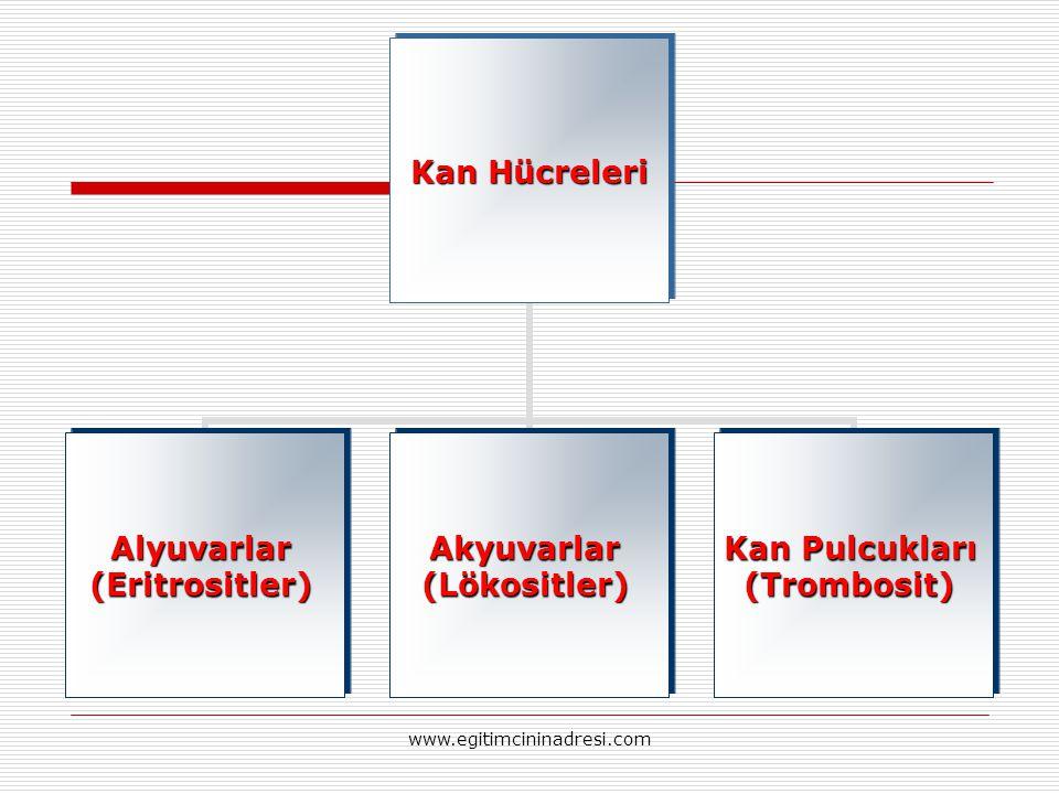 Kan Hücreleri Alyuvarlar(Eritrositler)Akyuvarlar(Lökositler) Kan Pulcukları (Trombosit) www.egitimcininadresi.com