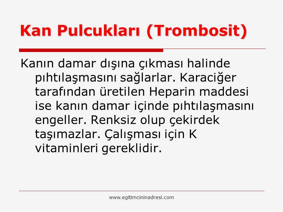Kan Pulcukları (Trombosit) Kanın damar dışına çıkması halinde pıhtılaşmasını sağlarlar. Karaciğer tarafından üretilen Heparin maddesi ise kanın damar