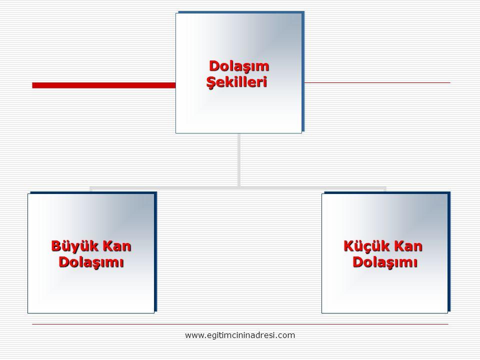 DolaşımŞekilleri Büyük Kan Dolaşımı Küçük Kan Dolaşımı www.egitimcininadresi.com