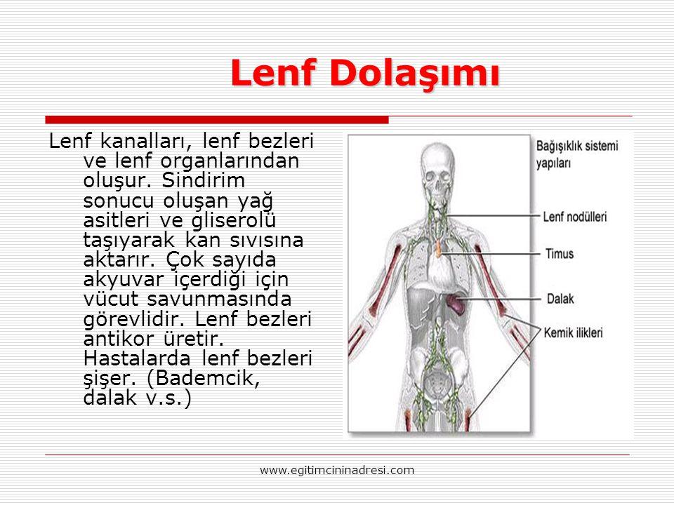 Lenf Dolaşımı Lenf Dolaşımı Lenf kanalları, lenf bezleri ve lenf organlarından oluşur. Sindirim sonucu oluşan yağ asitleri ve gliserolü taşıyarak kan