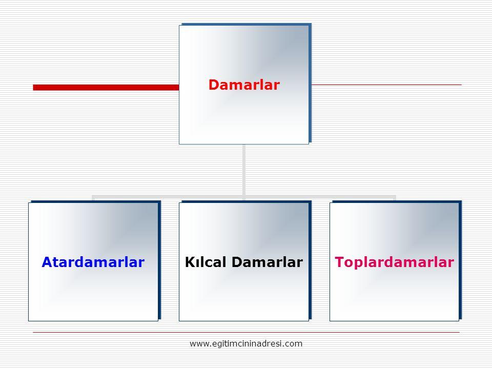 Damarlar AtardamarlarKılcal DamarlarToplardamarlar www.egitimcininadresi.com