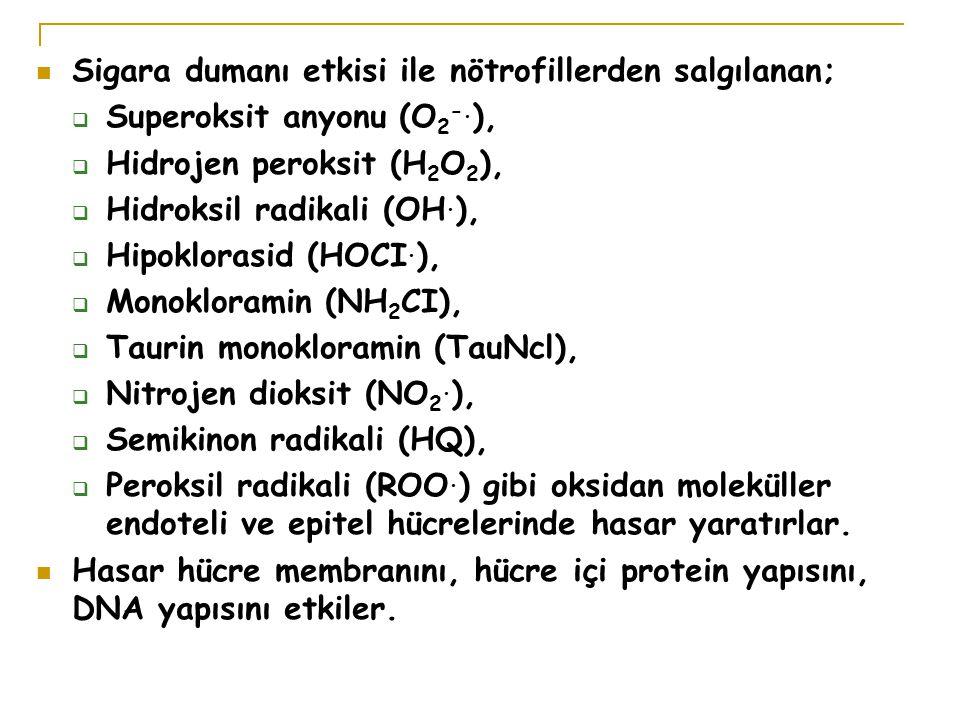 Sigara dumanı etkisi ile nötrofillerden salgılanan;  Superoksit anyonu (O 2 -.