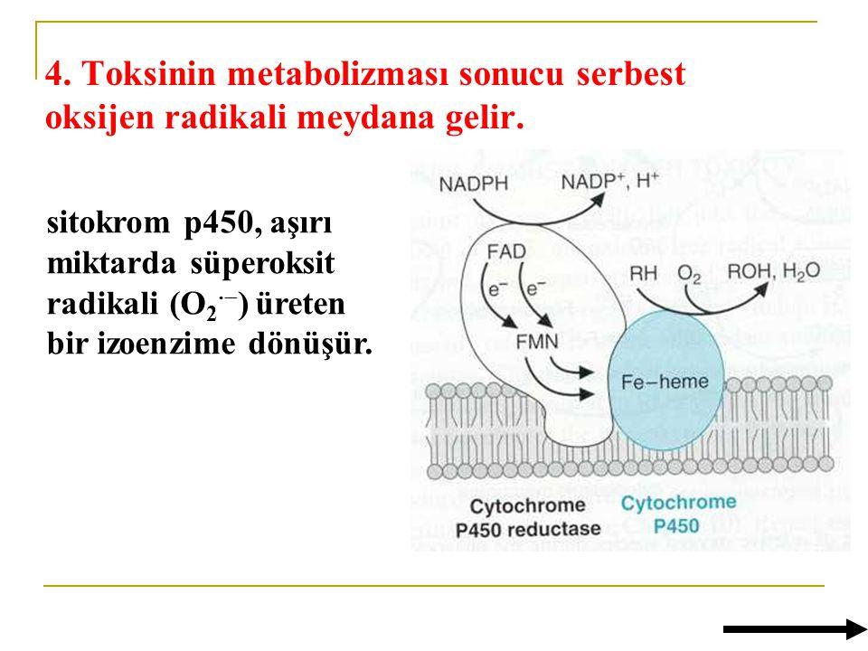 4.Toksinin metabolizması sonucu serbest oksijen radikali meydana gelir.