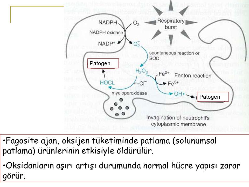 Patogen Fagosite ajan, oksijen tüketiminde patlama (solunumsal patlama) ürünlerinin etkisiyle öldürülür.