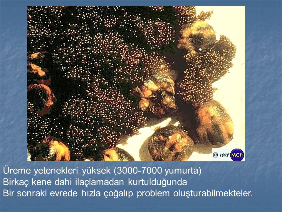 Üreme yetenekleri yüksek (3000-7000 yumurta) Birkaç kene dahi ilaçlamadan kurtulduğunda Bir sonraki evrede hızla çoğalıp problem oluşturabilmekteler.