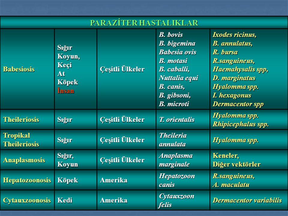Kene Felci Ehrlichiosis Lyme Disease Pasteurella Q fever Bulaştırdıkları diğer hastalıklar