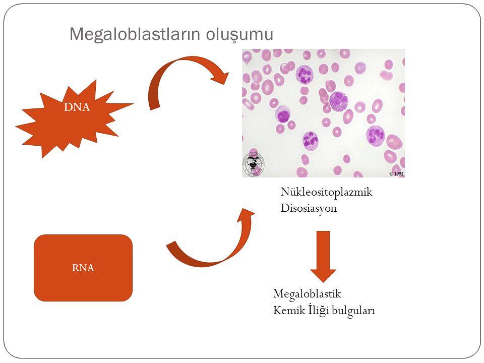 Megaloblastların oluşumu DNA RNA Nükleositoplazmik Disosiasyon Megaloblastik Kemik İ li ğ i bulguları