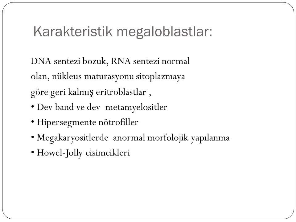 Karakteristik megaloblastlar: DNA sentezi bozuk, RNA sentezi normal olan, nükleus maturasyonu sitoplazmaya göre geri kalmı ş eritroblastlar, Dev band ve dev metamyelositler Hipersegmente nötrofiller Megakaryositlerde anormal morfolojik yapılanma Howel-Jolly cisimcikleri