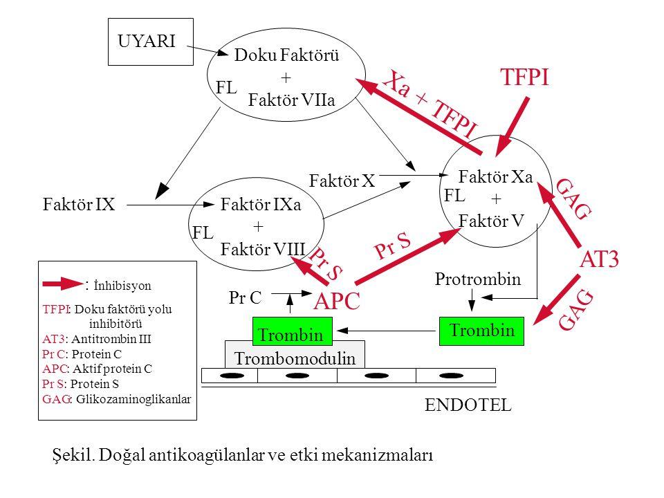 UYARI Faktör X Doku Faktörü + Faktör VIIa Faktör Xa + Faktör V Faktör IXFaktör IXa + Faktör VIII Protrombin FL Trombin Trombomodulin Pr C APC AT3 TFPI