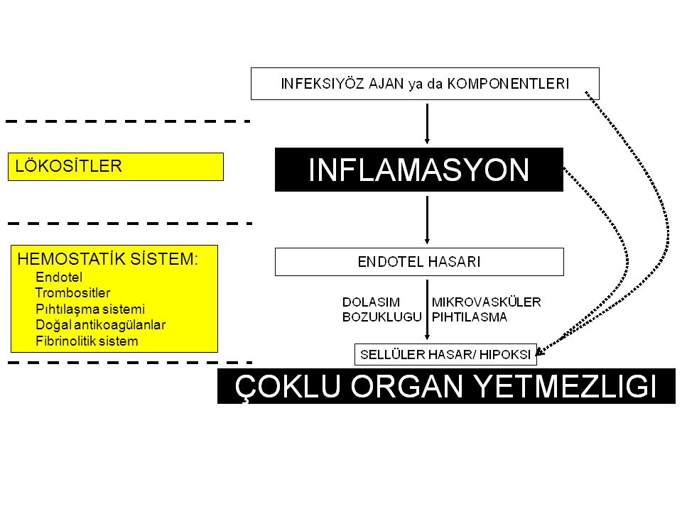 LÖKOSİTLER HEMOSTATİK SİSTEM: Endotel Trombositler Pıhtılaşma sistemi Doğal antikoagülanlar Fibrinolitik sistem