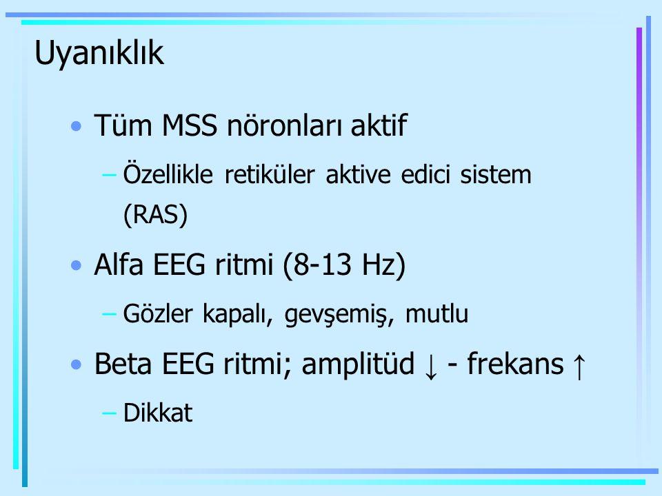 Uyanıklık Tüm MSS nöronları aktif –Özellikle retiküler aktive edici sistem (RAS) Alfa EEG ritmi (8-13 Hz) –Gözler kapalı, gevşemiş, mutlu Beta EEG rit