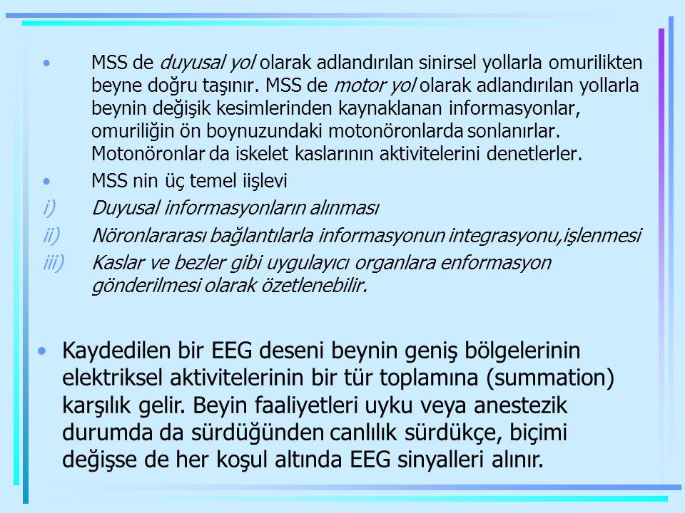 MSS de duyusal yol olarak adlandırılan sinirsel yollarla omurilikten beyne doğru taşınır. MSS de motor yol olarak adlandırılan yollarla beynin değişik