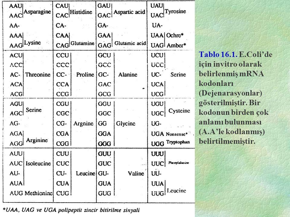 Tablo 16.1. E.Coli'de için invitro olarak belirlenmiş mRNA kodonları (Dejenarasyonlar) gösterilmiştir. Bir kodonun birden çok anlamı bulunması (A.A'le