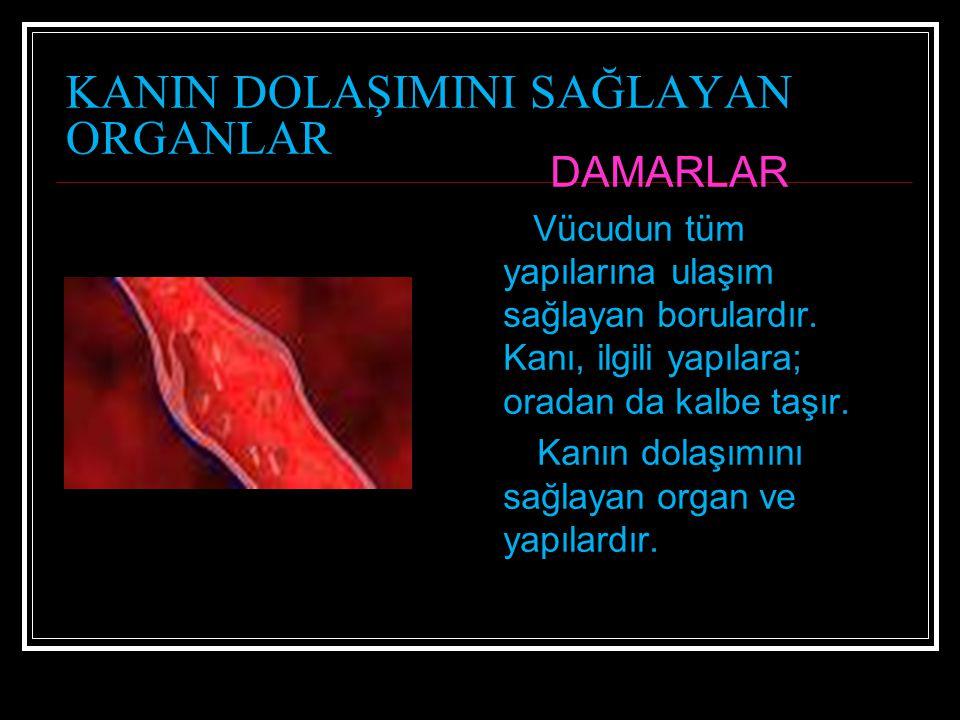 KANIN DOLAŞIMINI SAĞLAYAN ORGANLAR DAMARLAR Vücudun tüm yapılarına ulaşım sağlayan borulardır. Kanı, ilgili yapılara; oradan da kalbe taşır. Kanın dol