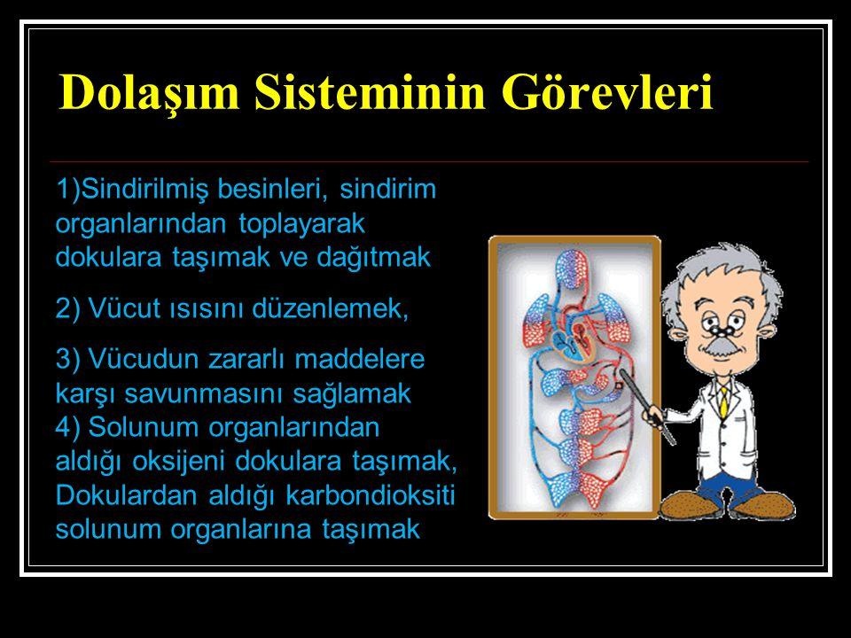 Dolaşım Sisteminin Görevleri 1)Sindirilmiş besinleri, sindirim organlarından toplayarak dokulara taşımak ve dağıtmak 2) Vücut ısısını düzenlemek, 3) V